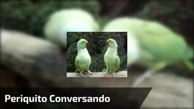 Periquito De Colar Conversando, Olha Só Que Animal Incrível!