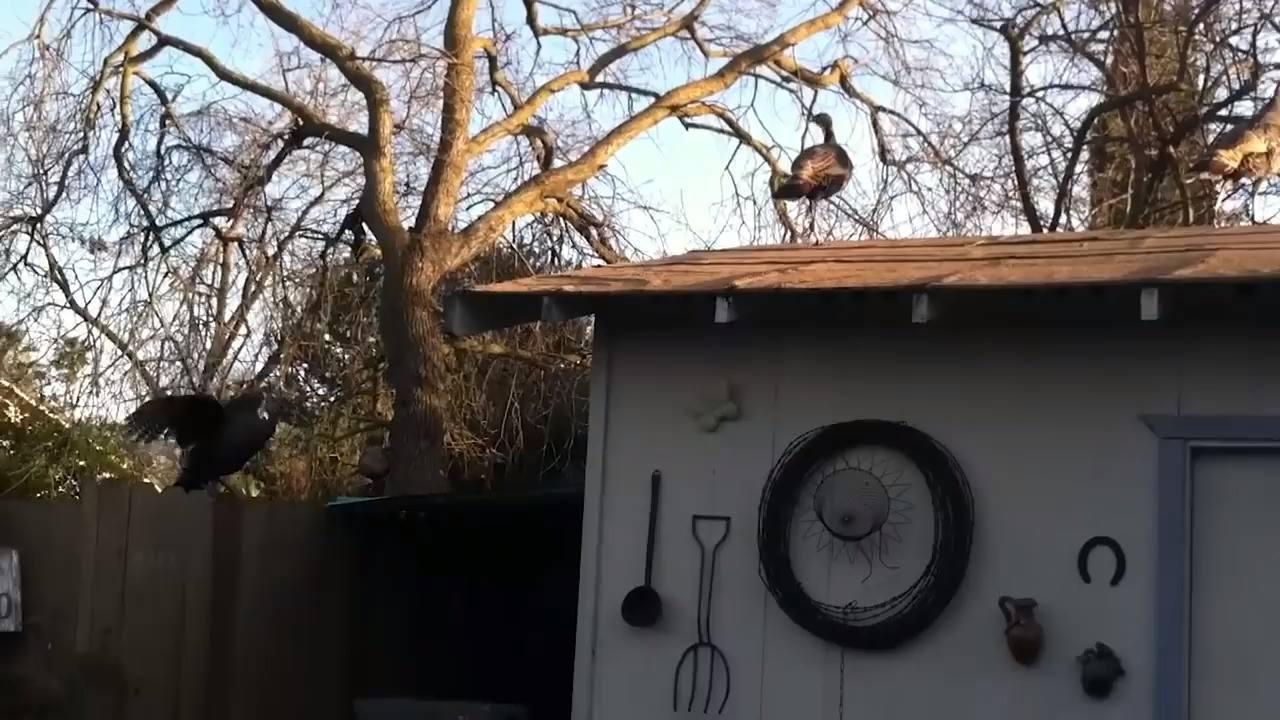 Perus uma uma ave inteligente que cria laços com outros animais de mesma especie