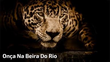 Pescadores Filmam Onça Na Beira Do Rio, Olha Só Que Fantástico!