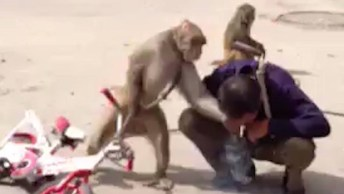 Pessoas Em Contados Com Os Animais, Um Vídeo Muito Engraçado!