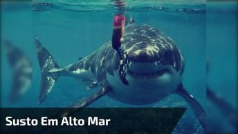 Pessoas Quase Viraram Comidas De Tubarão, Que Susto Hein, Confira!