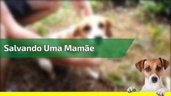 Pessoas Salvando Uma Mamãe Cachorra Que Acabou De Dar Cria, Que Linda Atitude!