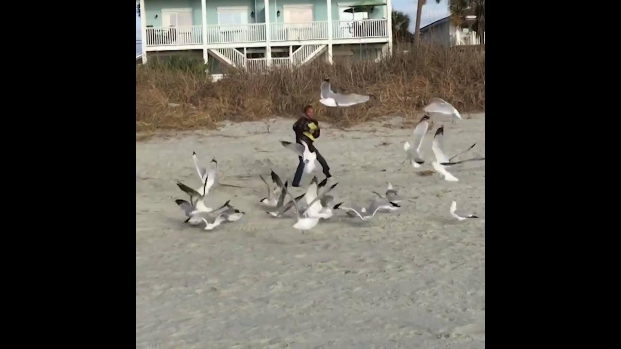 Pessoas se assustando com animais, você vai dar muitas risadas hahaha!