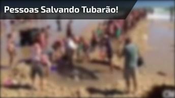 Pessoas Se Unem Na Praia Para Salvar Um Tubarão Encalhado!