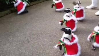 Pinguins Vestidos Para O Natal, Que Gracinha Que Eles São!