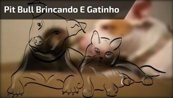 Pit Bull Brincando Com Filhote De Gatinho, Veja A Calma Dele Com Pequeno!
