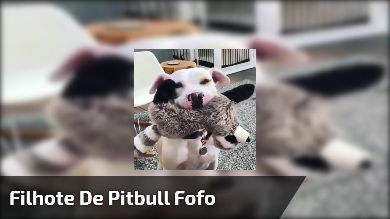 Filhote de Pitbull fofo