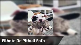 Pit Bull Mais Fofo Que Você Já Viu Na Vida, Veja Ele Brincando!
