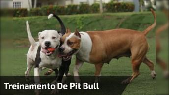 Pit Bulls Treinando Para Campeonatos, Veja A Força Que Tem Este Cão!