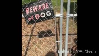Placa Avisa 'Cuidado Com Cachorro', Dai Você Olha Para Uma Fofura Dessa!