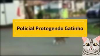 Policial De Transito Protegendo Gatinho Para Atravessar A Rua!