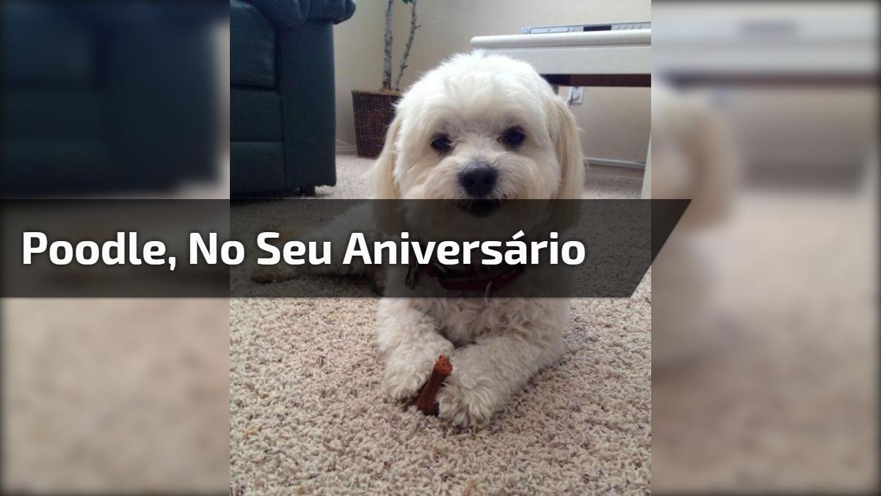 Poodle, no seu aniversário