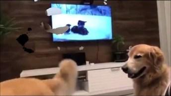 Por Que Os Golden Retrievers São Os Cães Mais Engraçados Do Mundo?