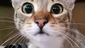Porque Falam Que Os Gatos Irão Dominar O Mundo? Descubra Neste Vídeo!