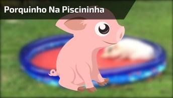 Porquinho Brincando Na Piscininha, Olha Só A Alegria Deste Amiguinho!
