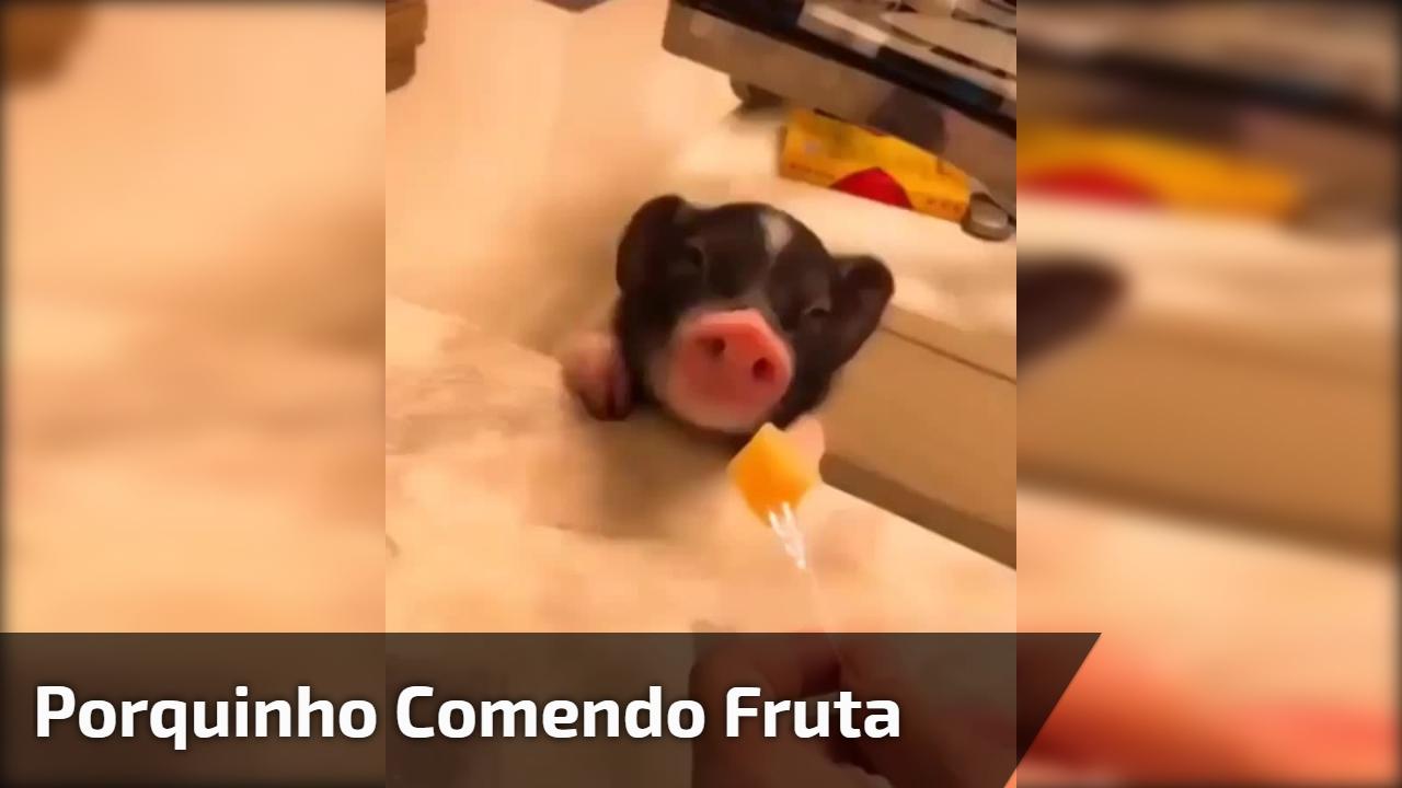 Porquinho comendo fruta