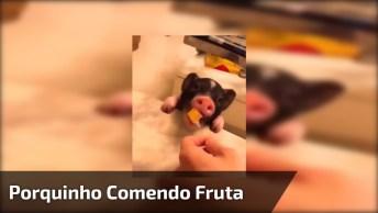 Porquinho Comendo Uma Frutinha, Olha Só Que Animal Mais Lindinho!
