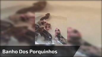Porquinhos Tomando Banho, Como Estes Animais São Bonitinhos!