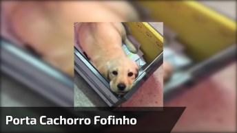 Porta Cachorro Fofo, Quem Resiste A Esta Carinha Linda Dentro Da Gaveta!