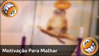 Precisando De Motivação Para Malhar, Siga O Exemplo Destes Esquilos!