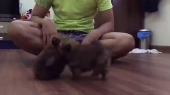 Primeiro Round De Fofura De Cachorrinhos, Você Vai Se Apaixonar Por Eles!