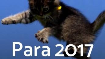 Promessas Que Os Gatos Fazem Quando Começam O Ano, Só Que Não, Kkk!
