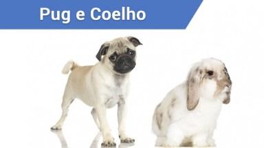 Pug Tentando Fazer Amizade Com Coelho Fofo!