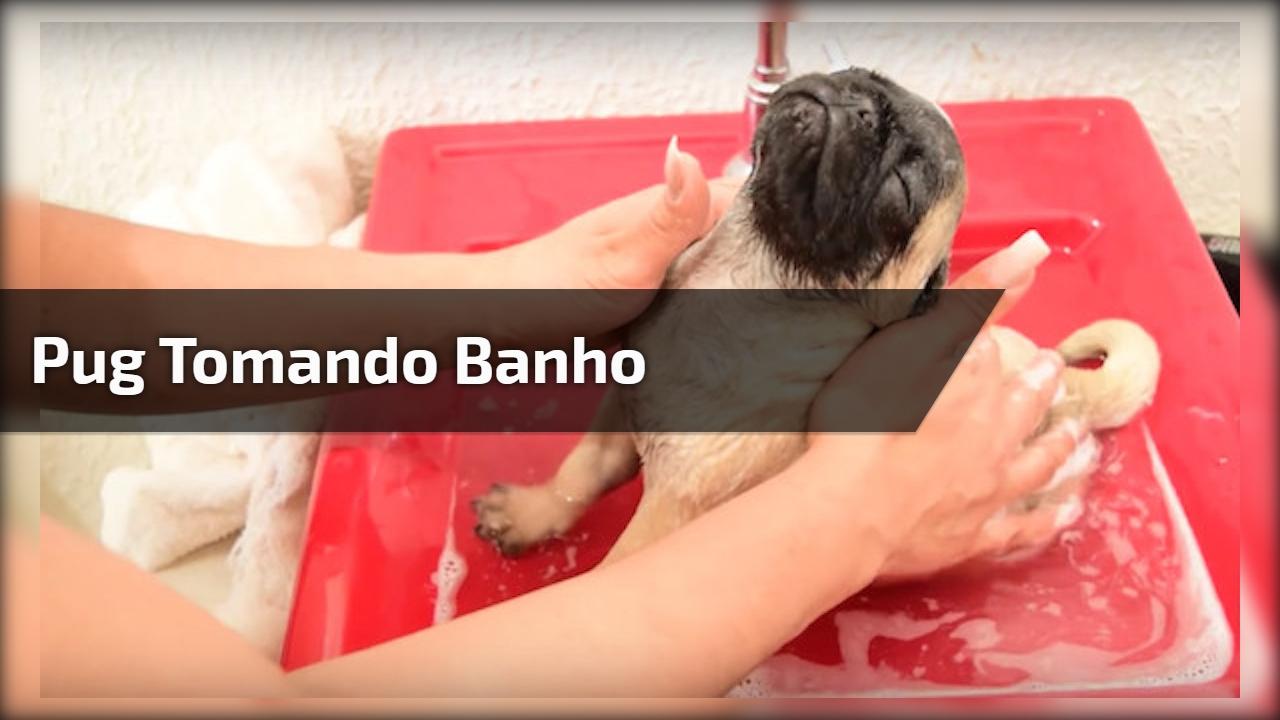 Pug tomando banho