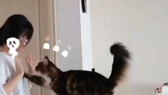 Qual É O Gato Mais Carente Do Mundo? Assista Ao Vídeo E Conheça-O!