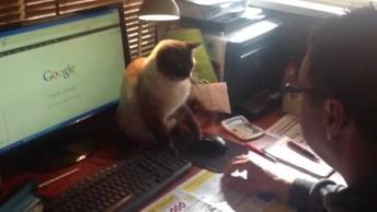 Quando Até O Gatinho Ficou Bravo Por Você Ficar O Dia Inteiro No Computador!