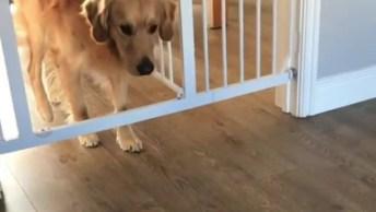 Quando Chega Visita Na Sua Casa Hahaha, Esses Cachorros São Demais!