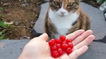 Quando Gato Não Gosta De Algo, Nem Tente Forçar A Barra, Confira!