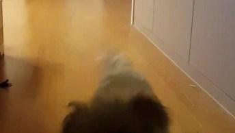 Quando Você Chama Seu Cachorro Para Comer, Que Fofura De Cão!