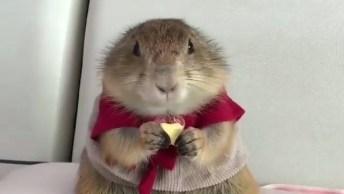 Quando Você Esta Comendo Algo E Vai Chegando Alguém Por Perto!
