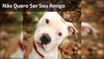 Quando Você Tenta Fazer Amizade Com Um Cão, Mas Ele Não Quer, Hahaha!