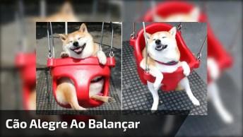 Quanta Alegria Deste Cãozinho Em Balançar, Kkk! Veja Só O Seu Sorriso!
