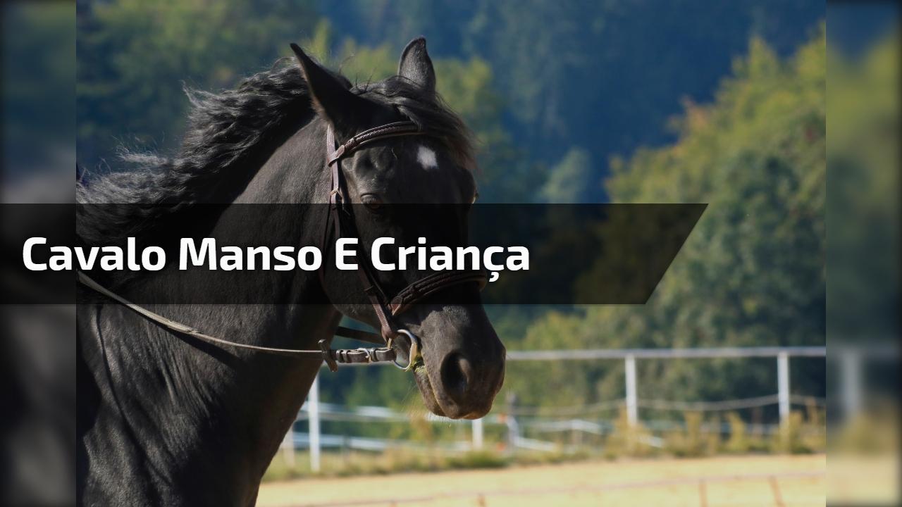 Cavalo manso e criança