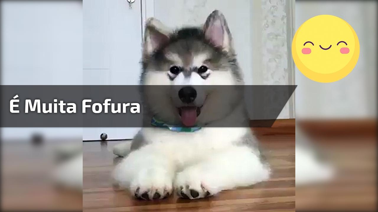 Que cãozinho mais lindinho mais fofinho! É muita fofura em um único ser!!!