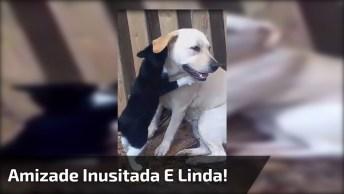 Que Imagem Mais Fofa! Veja Só Que Amizade Inusitada E Linda!