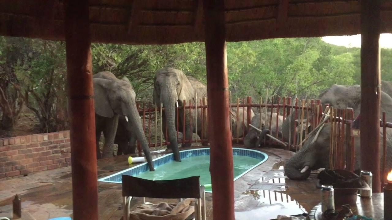 Que tal uma festa na piscina com os amiguinhos da selva