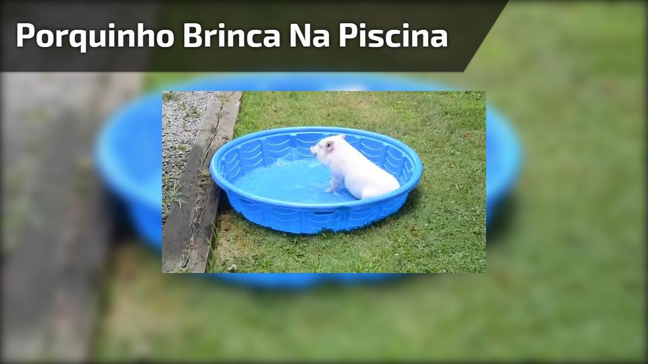 Porquinho brinca na piscina