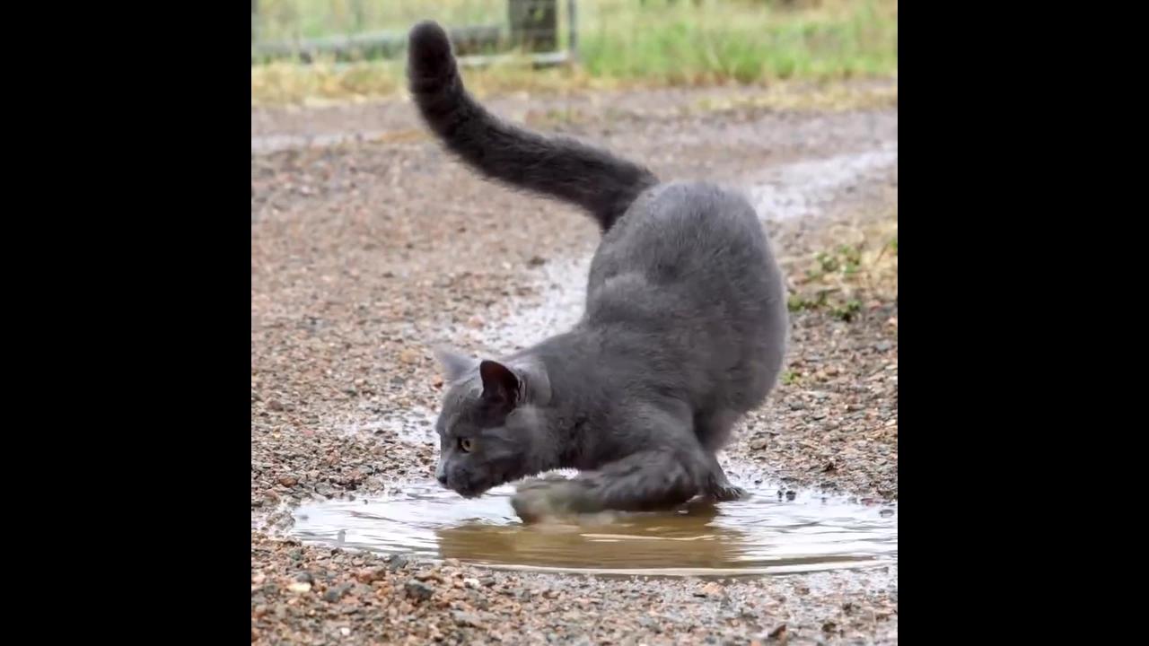 Quem foi que disse que gato não gosta de água