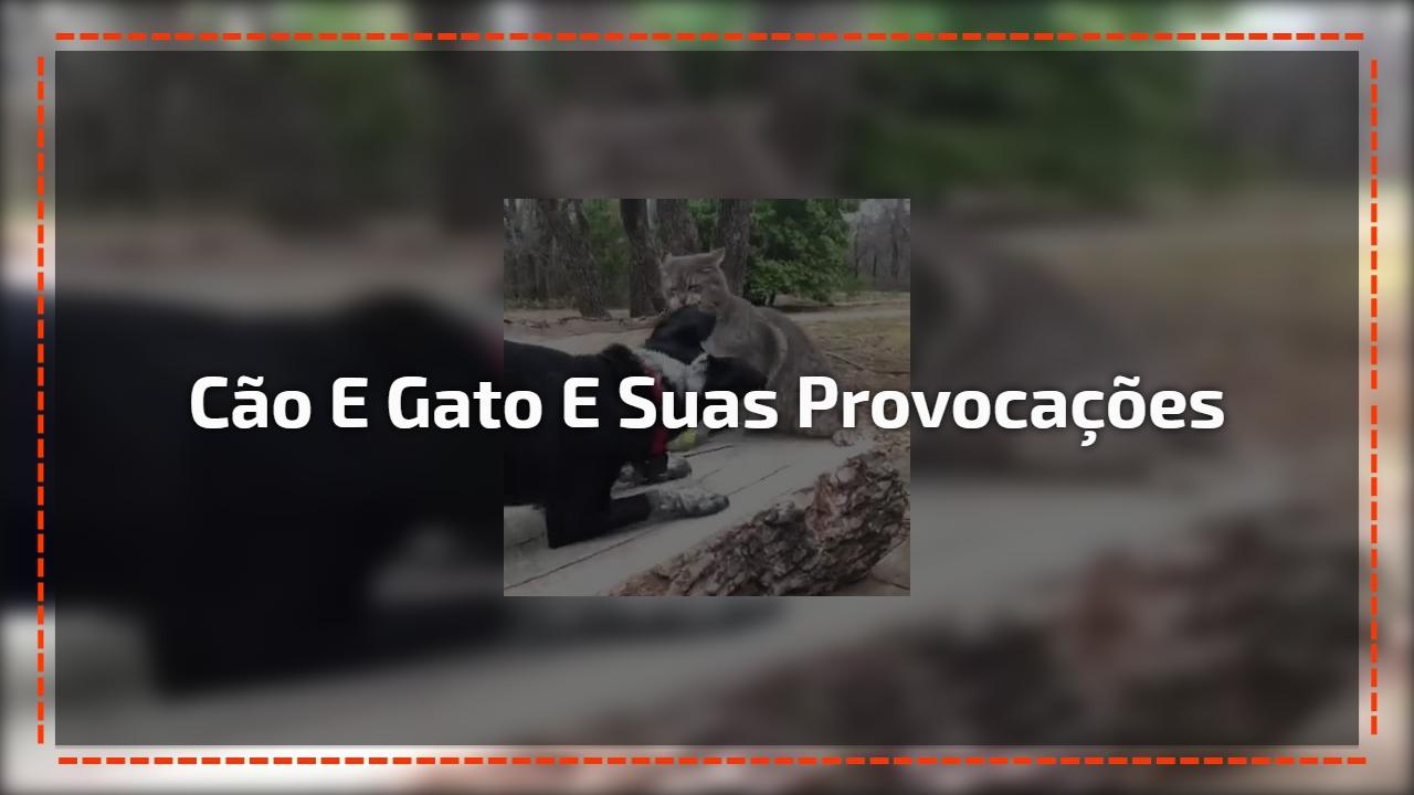 Cão e gato e suas provocações