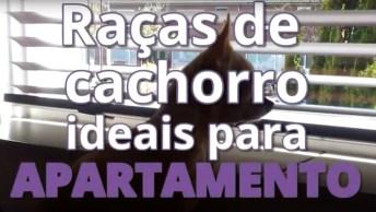 Raças De Cães Ideias Para Quem Mora Em Apartamentos, Vale A Pena Conferir!
