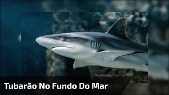 Rapidez De Um Tubarão No Fundo Do Mar, Olha Só Que Impressionante!