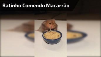 Ratinho Comendo Macarrão, Devagar Ele Vai Pegando Um Por Um!