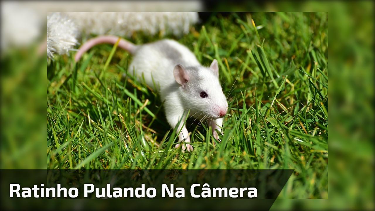 Ratinho pulando na câmera
