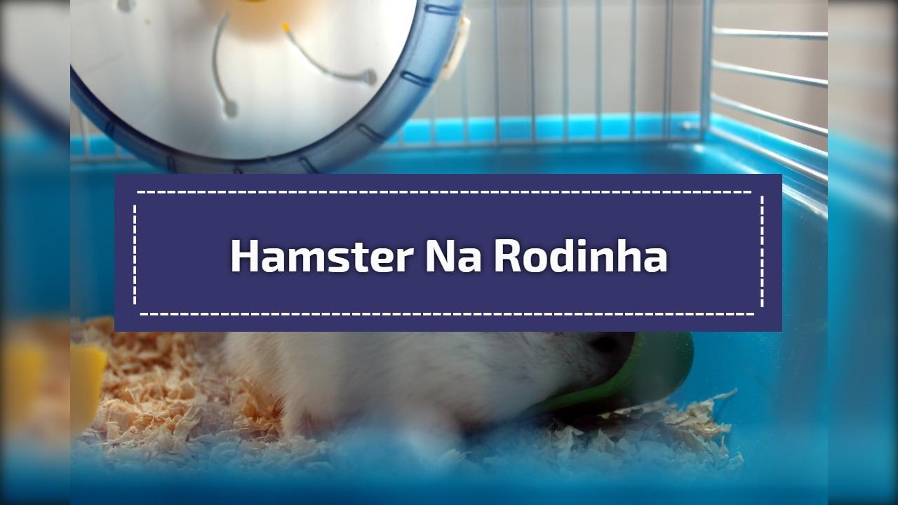 Hamster na rodinha