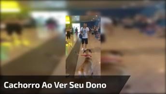 Reação De Cachorro Ao Ver Seu Dono Depois De Muito Tempo, Confira!