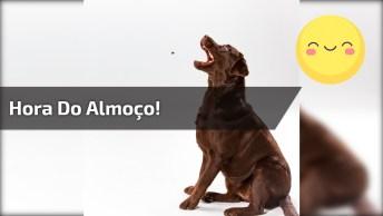 Reação De Um Cachorro Na Hora De Receber A Comida, Olha A Alegria Dele!
